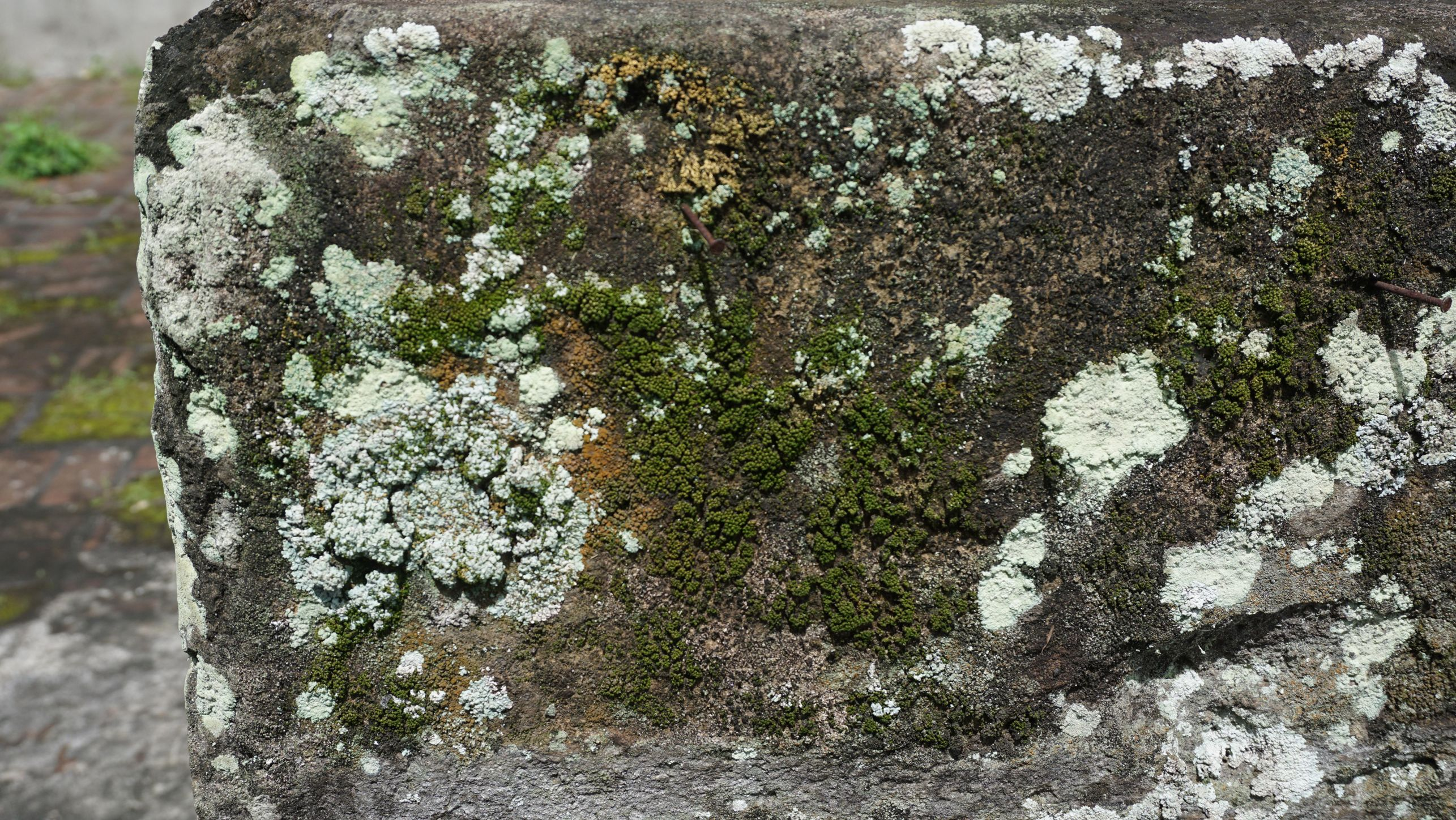 Mosses and lichens infested stone structure: before conservation. Image courtesy of Saiful Bakhri.